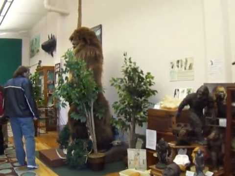 Cryptozoology - BIG FOOT