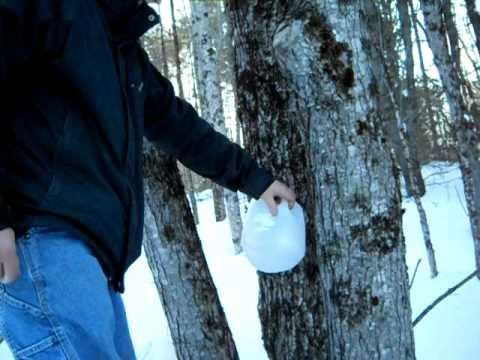 How you can Tap for Maple Syrup