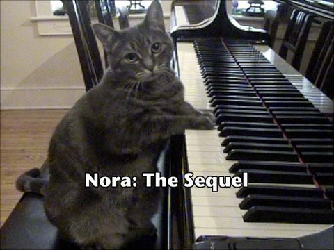 Nora The Cat Plays Piano Duet