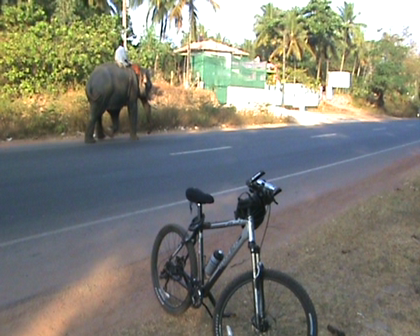 Gods_Country_elephant2