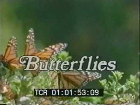 Andre Woodvine's butterfly scoring project