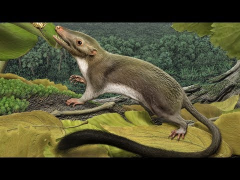 Researchers Reconstruct the Common Ancestor of Placental Mammals