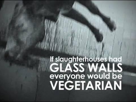Paul McCartney fala sobre a crueldade dispensada aos animais para humanos se alimentarem