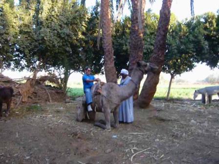 AVENTURA DE CAMELO, NO EGITO