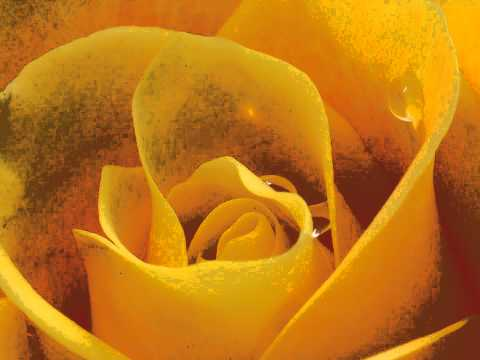 Clementina de Jesus e Conjunto Rosa de Ouro - Pout Pourri
