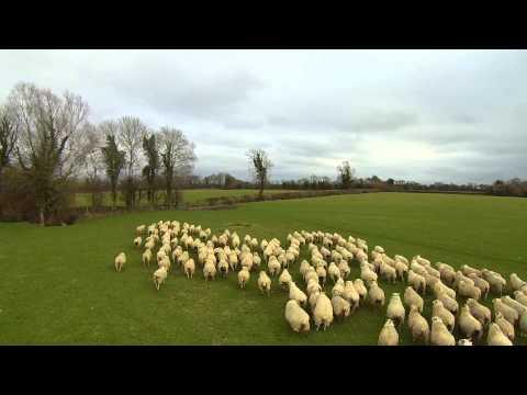 O drone do pastoreio