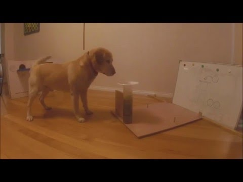 Albert, o cão cientista