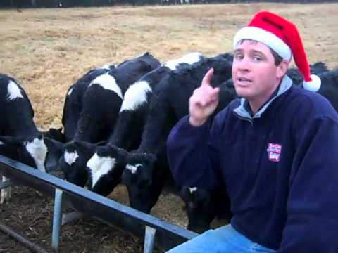 Have a Dairy, Merry Christmas!