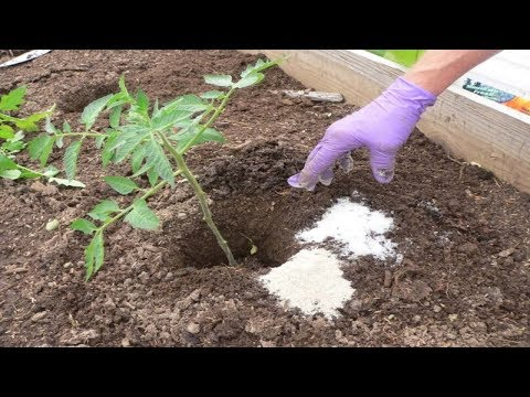 See What Happens When You Add Epsom Salt to Your Plants