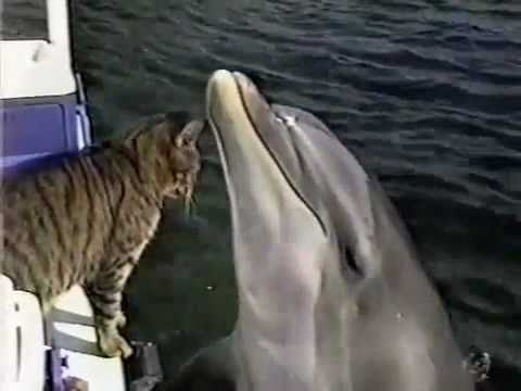 SEE IT HERE FIRST! Cat and Dolphin play together