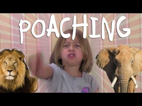 What is Poaching? - Greyson Explains