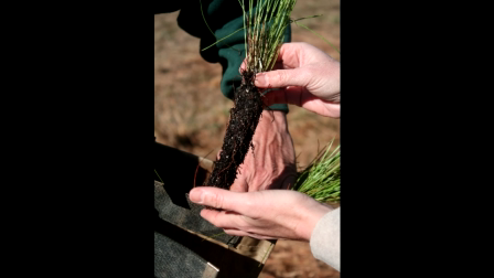 Longleaf Planting at Callaway Gardens with Garden & Gun Magazine January 2012