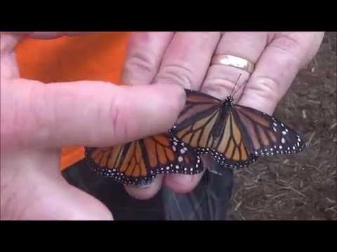 Nature Girls - Folk's Butterfly Farm
