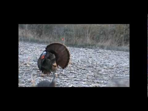Michigan Spring Turkey Hunt