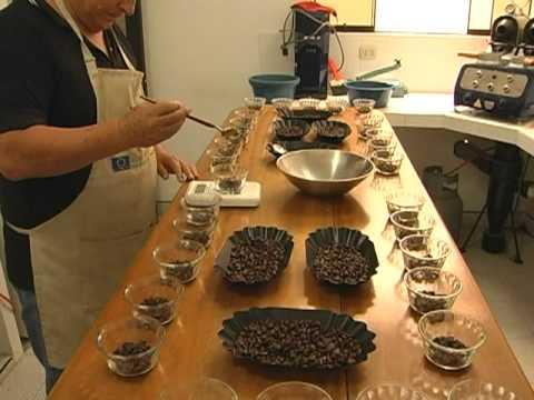 Cafés Especiales y Calidad de Café