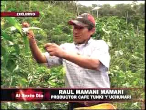 El príncipe del café: un raro y apreciado producto peruano