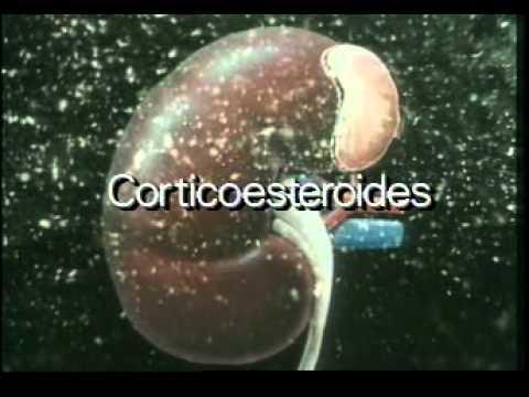 CONOCIENDO NUESTRO CUERPO : Sistema endocrino o glandulas.mpg