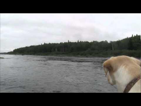 Salmon Fishing, August 2010