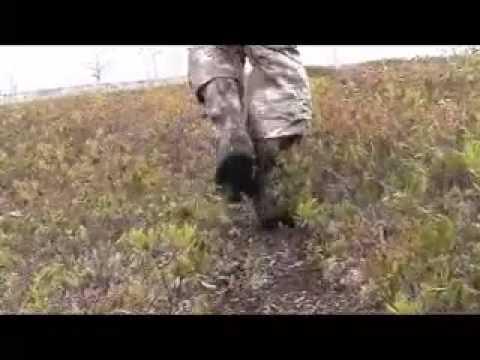 Spot and Stalk Bear Hunt Newfoundland Spring 2011