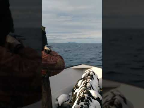 Turr Hunting in Nfld with with Peter & Blake