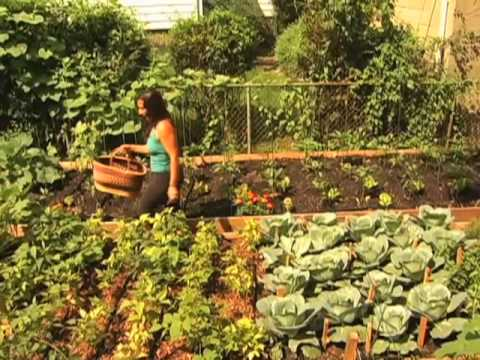 FOOD CURATED: NYC's Cool New Backyard Farms: Growing More Than Just Produce