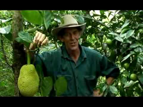 Geoff Lawton's Permaculture Food Forest