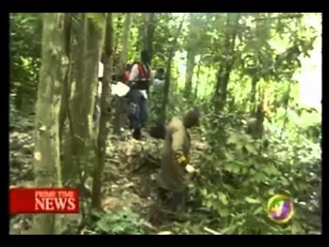 TVJ - FARMER FOUND DEAD IN BUSHES IN ST MARY
