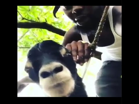 Popcaan interviewing A Goat while Cutting its Head Off