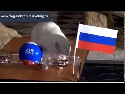 Эрмитажный кот Ахилл предсказал победителя в матче между сборными России и Египта