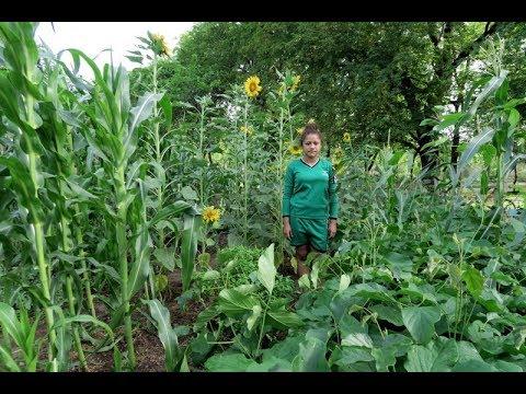 NicaPhoto Biointensive Organic Garden 1.0