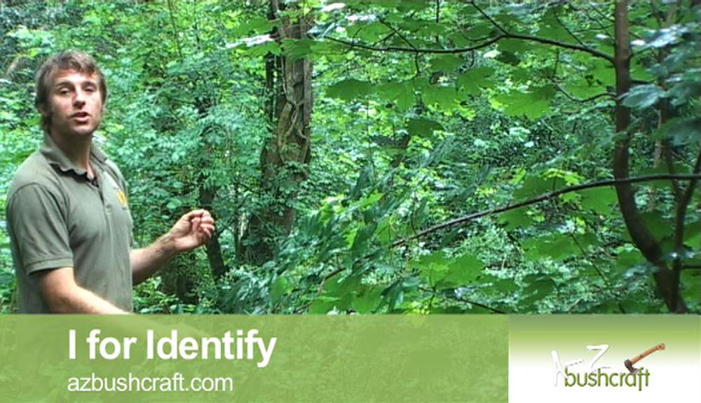 I for Identify