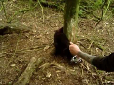 POSSUM TRAPPING IN NEW ZEALAND.wmv PLUCKING FLUFF