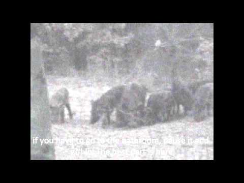 Hogs Part 4 the finale.wmv