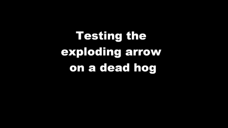 Exploding Arrow on Hog