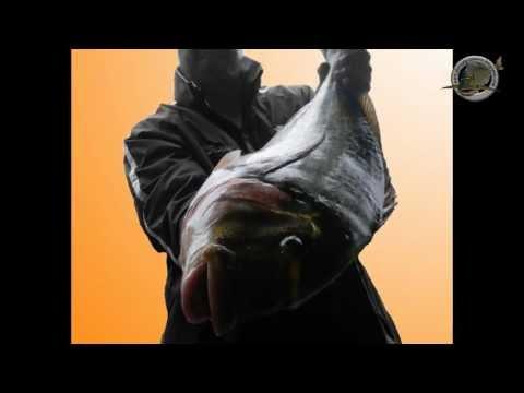 pescadoradatanero DORADA GIGANTE ( XL ) fishing orata peche dorade .wmv