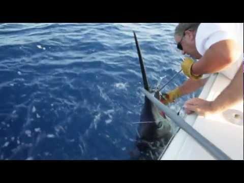 """Pesca de gran marlin Azul marlin """"Fishing big blue marlin"""""""