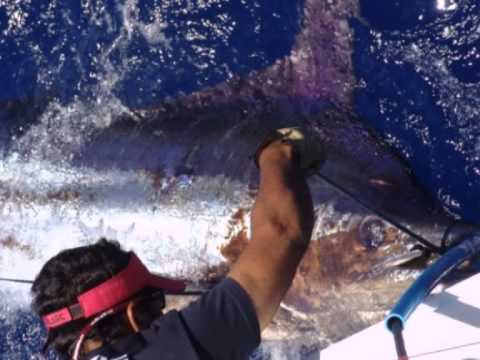 Noalex Sport Fishing