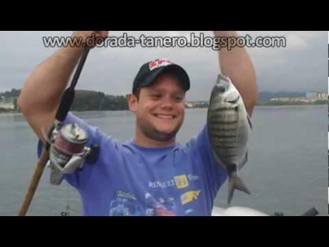 pescadoradatanero SARGOS  Fer y tanero pesca dorada fishing orata peche dorade.wmv