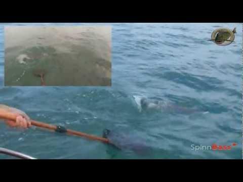 pescadoradatanero LUBINAS-ROBALOS fishing sea bass,  il pêche lubina, pesca bass.wmv