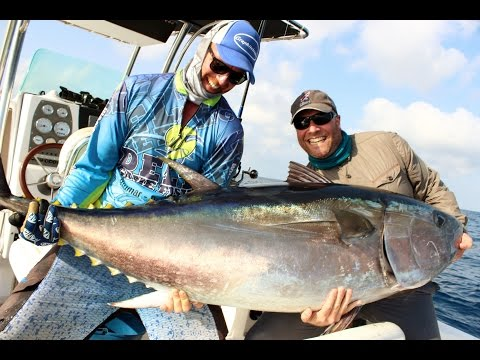 Fishing Tuna chumming on Stand-Up Ebro delta. Atun rojo a brumeo en Stand-Up