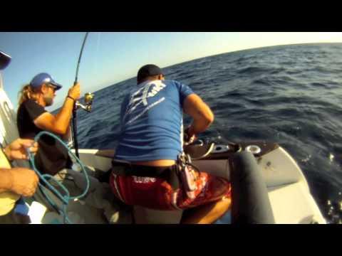 combate, captura y suelta de atún a spinning delta ebro
