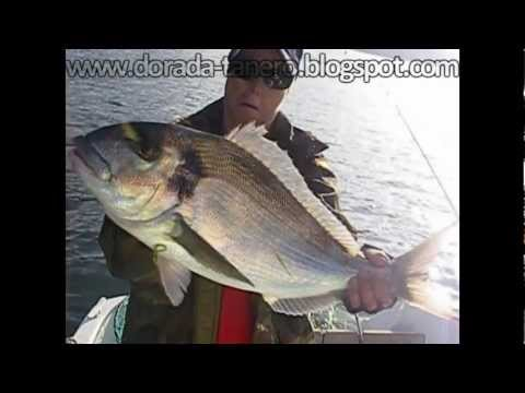 pescadoradatanero 9ª ( PELEA XL) fishing orata, peche dorade, pesca dorada.wmv