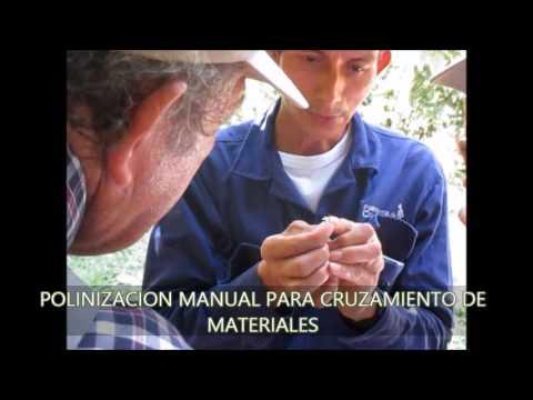 GIRA DE INTERCAMBIO,  GRANJA YARIGUIES parte 1