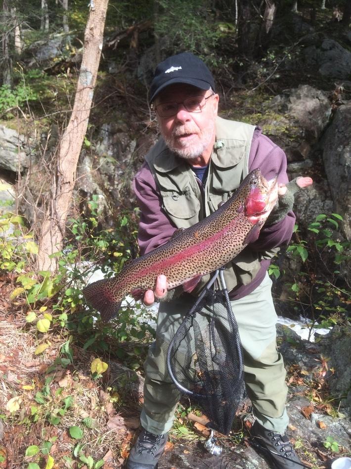"""Gregs 20"""" Beauty Rainbow Trout"""