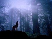 Waya Ageyuhi(Loving Wolf)