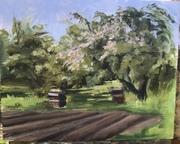 Austin's Garden