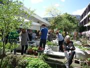 Edible Garden Open Day - Golden Lane Allotments