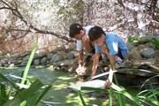 Home School - Wetland Munchers