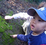 Little Naturalists: Spectacular Senses