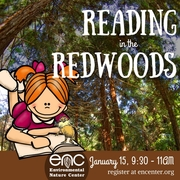 Reading in the Redwoods